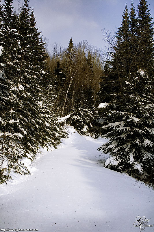 20070126140546_sentier_neige.jpg