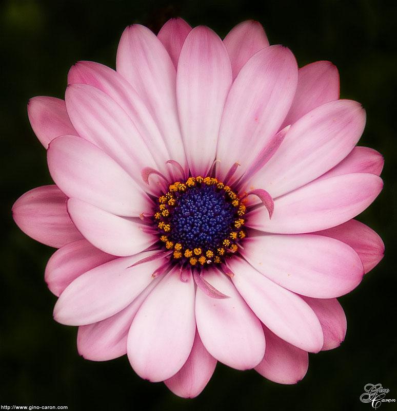 20070608101536_fleur.jpg