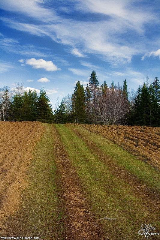 Le chemin de tracteur II
