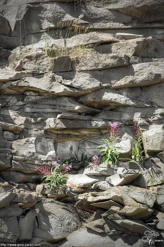 Vie dans les rochers
