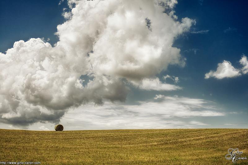 Seule dans le champs