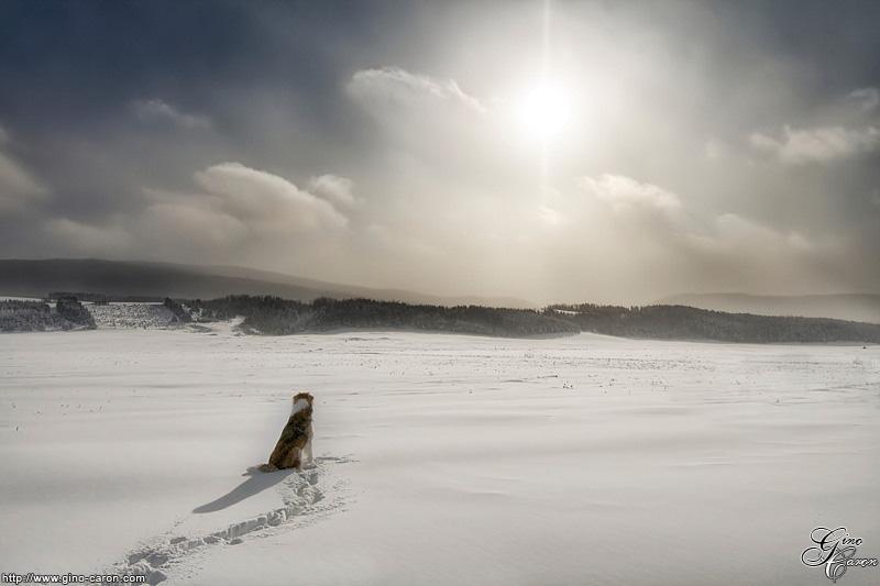 Le chien face à l'hiver…