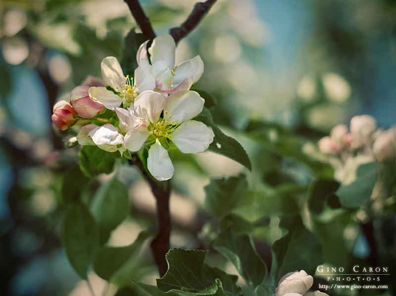 20090614191550_fleurs.jpg