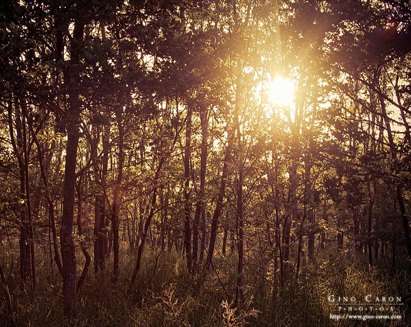 Jeune forêt et soleil