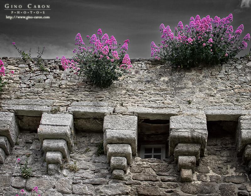 Fleur et mur