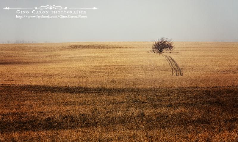 20120411210419_arbre.jpg