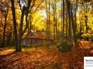 La vieille cabane et l'automne