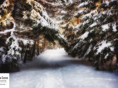 Le sentier de neige