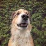 « Selfie » de chien