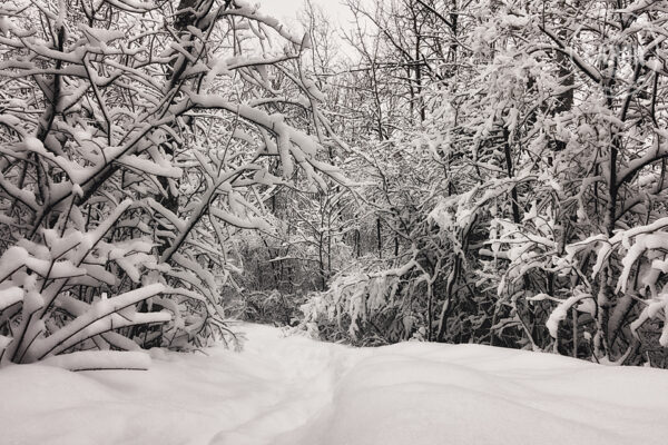 Le sentier de neige II