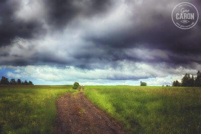 Le chemin entre les champs