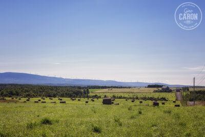 Paysage agricole sur fond d'éoliennes