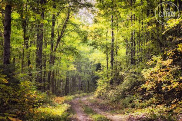 Marche dans la forêt II