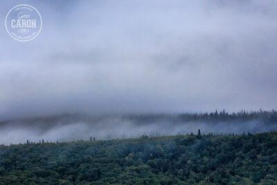 Brume dans la forêt