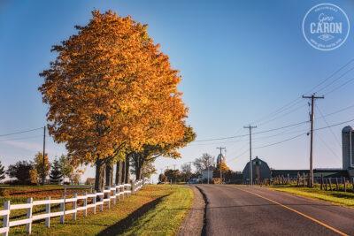 Ruralité et automne