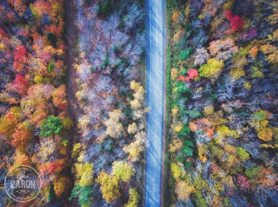 La route et l'automne