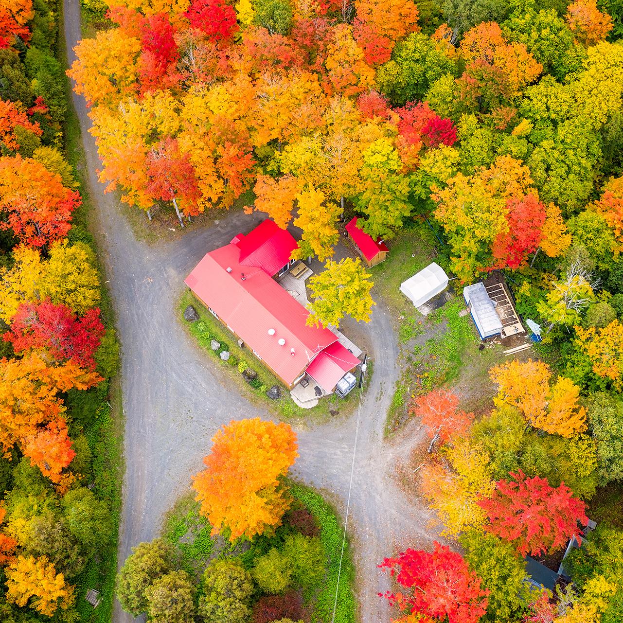 Érablière à l'automne