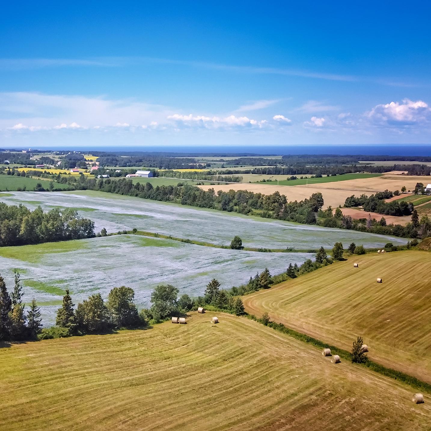 Les différentes teintes de l'agriculture